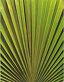 Palms of Malaya - T.C. Whitmore