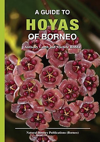 A Guide to the Hoyas of Borneo - Anthony Lamb & Michele Rodda