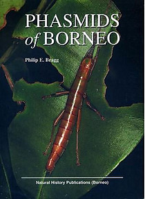 Phasmids of Borneo - Philip E Bragg