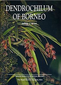 Dendrochilum of Borneo - Jeffrey J Wood