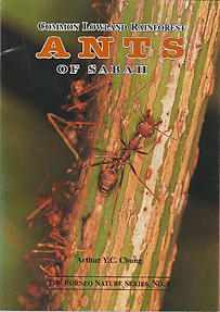 Common Lowland Rainforest Ants of Sabah - Arthur Y. C. Chung