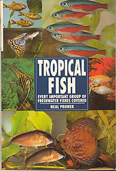 Tropical Fish - Neal Pronek